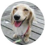 【なんとなく収益が上がったブロガーへ】今すぐ寺子屋SEOブログでサイト設計を学ぼう!